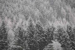 Trees in the snow (KH748) Tags: trees snow forest woodland scotland greatglen argyleandbute