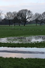 Wavertree Playground (Towner Images) Tags: park city winter copyright tree grass liverpool football goal seagull pitch flooded merseyside waterlogged towner townerimages