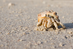 on the beach at sunset... (spettacolopuro) Tags: new trip travel sea vacation macro beach nature water beautiful animal animals photography amazing sand unique critter shell stunning majestic