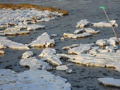 ijsschotsen. (Omroep Zeeland) Tags: ijsschotsen