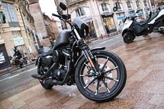 Harley Davidson (xwattez) Tags: street france motorcycles motorbike american harleydavidson moto transports toulouse rue 2016 véhicule américaine