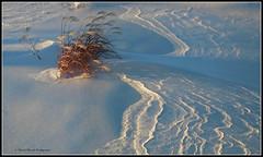 Ballet (2-2) (deplour) Tags: ballet snow shadows neige tallgrass ombres fouines