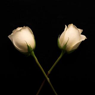 Crossed Roses