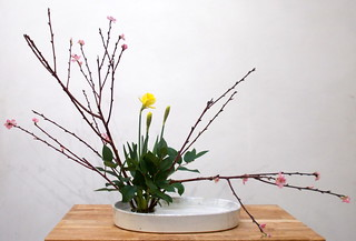 Ikebana -Moribana de jonquilles