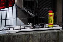 Today's Cat@2016-02-07 (masatsu) Tags: cat pentax catspotting mx1 thebiggestgroupwithonlycats