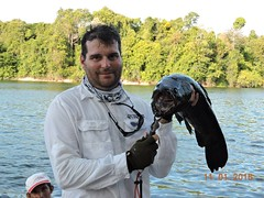 12565563_933892290033789_8172092353753185931_n (Nelson Lage - pescamazon.com.br) Tags: trip travel fish river fishing amazon bass peixe catfish xingu flyfishing casting tucunare pescaria amazonia peacockbass trombetas payara