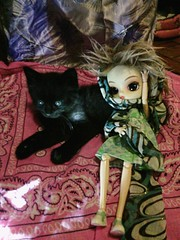 Companheiros da noite (MariMahe) Tags: blackcat kitten olivia dal panther monomono