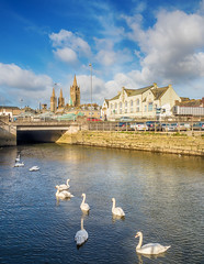 Swans at Town Quay, Truro 1024 (RockArea) Tags: cornwall truro