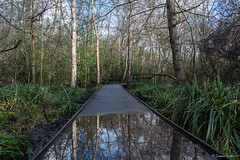 Reflection (Jemma Graham) Tags: uk trees england reflection water rain woodland reflections landscape puddle birmingham woods britain path paths bog moseley moseleybog