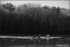 Rowers BW (ChristianRock) Tags: county bw white black river georgia 50mm pentax roswell rowing 17 fulton 50 smc k20 chattahoochee f17 pentaxm k20d