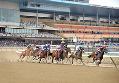 Racing at the Big A (Rock and Racehorses) Tags: ny turn scenic aqueduct clubhouse grandstand nyra webska0050