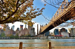 Roosevelt Island, 11.1.15 (gigi_nyc) Tags: nyc newyorkcity queensborobridge rooseveltisland fourfreedomspark