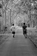 Back to nature #rx10 #backtonature #gateway (~ Amateur Photographer Passion On ~) Tags: gateway backtonature rx10