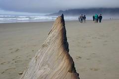 All Photos-9298 (jlh_lunasea) Tags: ocean beach driftwood manzanita