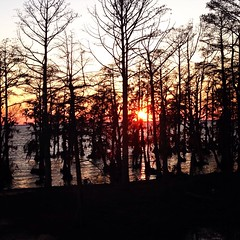 Sunset through the Cypress Trees (~jeannie~) Tags: trees sunset nc sound cypress edenton albemarle