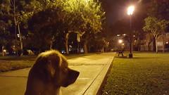 Lima - Parque Eduardo Villena Rey (Santiago Stucchi Portocarrero) Tags: miraflores lima perú santiagostucchiportocarrero parque eduardovillenarey perro roni vigilante cane can hound dog chien hund