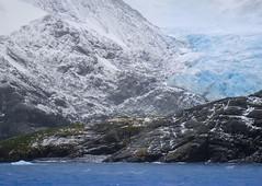 DSC03268 (peng_tim1) Tags: georgia south antarctica antarctic sd georgien anartikis