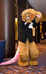 DSC_3364 (Acrufox) Tags: midwest furfest 2014 furry convention december hyatt regency ohare rosemont chicago illinois acrufox fursuit fursuiting mff2014