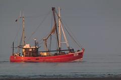 Krabbenkutter CUX 3 FORTUNA (spotterblog) Tags: vessel nordsee schiff fortuna elbe heimat cuxhaven norddeutschland krabbenkutter cux3