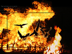conflict (Shahireh) Tags: birds escape burning conflict borders refuge  goback    shahirehsphotos  closedborders theyareafterourseeds bordersinfire