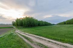 Landscape near Tisa river (devke) Tags: sunset forest river landscape view serbia tisa vojvodina kanjiza martonos tamron1750f28 nikond5100