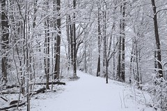 White Path (The Bruce Trail) in Rock Chapel area of Hamilton (Joseph Hollick) Tags: white snow hamilton snowcovered whiteforest