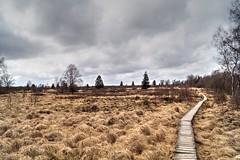 Fagnes - 12 (Ld\/) Tags: water spring belgium belgique belgie venn avril hoge monschau fagnes hautesfagnes 2016 venen eupen hohes waimes brackvenn