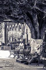 paz en la plaza (Maico Barocio) Tags: urban history architecture mexico arquitectura historic mexican urbana urbano mexicano
