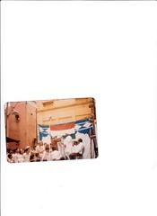 IMG_0181 (J P Agarwal - Naughara Kinari Bazar Delhi India) Tags: j p bharti naeem agarwal