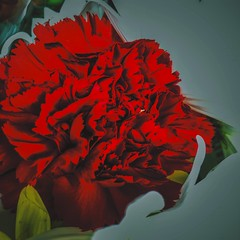 (Scorpiol13) Tags: red flower rose digitalart carnation floralart iphoneography mobileartistry mobiography