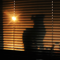 Silhouette (RD1630) Tags: sunset window cat silouette katze windowsill blends