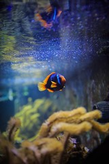 Coming Home (rezafarasati) Tags: fish color water nemo