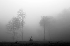 VQF192A7540 (HL's Photo) Tags: park sky bw plant tree nature landscape blackwhite natural outdoor hill foggy taiwan