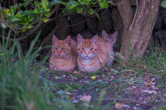 DSC_1193 (jambo2483) Tags: travel sea sky cats sun nature animal cat mammal coast fuji x100
