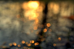 abstraction (joy.jordan) Tags: light sunset abstract blur reflection puddle bokeh oof 52by52