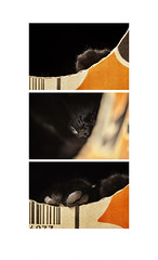 Nighty Night (<be>) Tags: cat triptych box cardboard goodnight noodlebox nightynight littledoglaughedstories