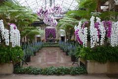 Splendiferous (edenseekr) Tags: orchids longwoodgardens treeferns