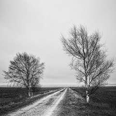 Two Birch Trees I (mattias.ljunggren) Tags: road bw tree monochrome finland spring birch bjrk trd vaasa vr vg vasa svartvitt sterbotten ostrobothnia sderfjrden sonya7 canonfdn28mmf28