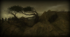 Inseparable  Trees (~ Imagination ~) Tags: nature landscape place landmark sl secondlife frisland