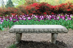 Sherwood Gardens ~ HBM! (karma (Karen)) Tags: flowers topf25 azaleas tulips maryland baltimore benches bushes hbm sherwoodgardens 4spring benchmonday