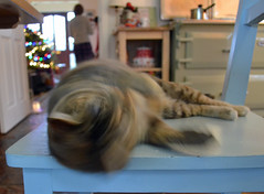 Happy Christmas everyone! (conall..) Tags: motion blur cat moving head jjazmine