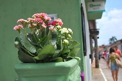 Ribeiro da Ilha (Denise Hsu) Tags: floripa brazil brasil santacatarina ribeirodailha cidadezinha floripa2015