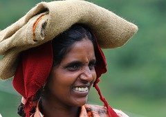 Tea Picker (16) (Richard Collier - Wildlife and Travel Photography) Tags: people woman india lady portraits kerala characters atwork southernindia marketseller teapicker