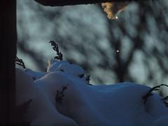 besonnter Tropfen (bratispixl) Tags: germany licht oberbayern sonne schatten farbig farben tautropfen chiemgau lichtwechsel traunreut schneeschmelze besonnt stadtrundweg bratispixl belichtungsproben
