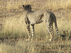 Africa 2015 081 (Absolute Africa 17/09/2015 Overlanding Tour) Tags: africa2015