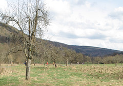 Spaziergnge im Orber Grund (JohannFFM) Tags: bad orb april spaziergnge grund frhjahr orber