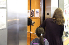 Bear In an Elevator (ruthlesscrab) Tags: library mapleridge