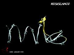 Resistance (-sebl-) Tags: plant paper wire war origami peace strip barbed unryu resistance sebl