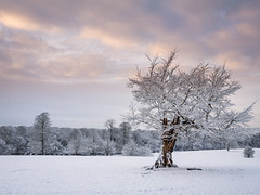 A Quiet Moment (Damian_Ward) Tags: wood trees snow woodland photography nt chilterns nationaltrust hertfordshire ashridge herts thechilterns chilternhills ashridgeestate damianward ©damianward
