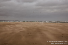 Windswept Beach at Tentsmuir Forest